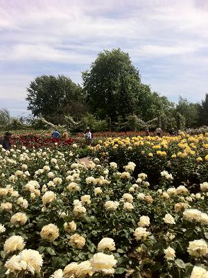 学校裏にあるRegent's Parkのバラ園 私にとっての癒しスポットでした。